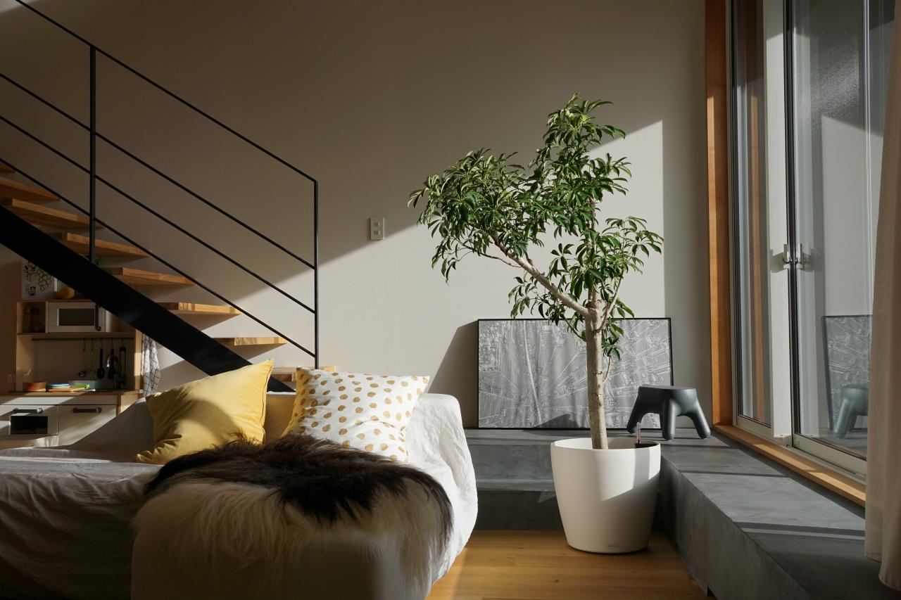 レチューザ植木鉢シェフレラ